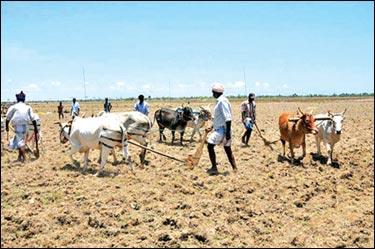farmers-in-vanni-sri-lanka