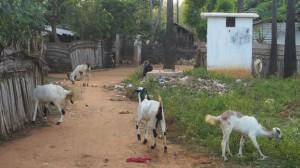 Living conditions at the Konapalam camp Sri Lanka's Jaffna district