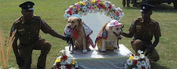 dogs_2654169b