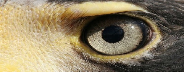 eagle-eye-safe-city-1-728