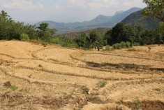 Sri Lanka's Annual Droughts Will Worsen Unless Government Steps Up; 800,000 Affected