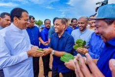 Sri Lanka: Political parties in crisis or transition  – Jayadeva Uyangoda