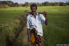 Sri Lanka kidney disease blamed on farm chemicals