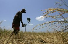 As Rural Sri Lanka Dries Out, Young Farmers Look for Job Options