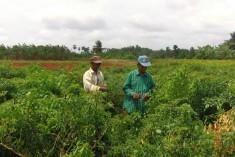 Post-War Land Grabs in Sri Lanka