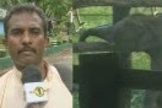 Sri Lanka: Elephant robbers charge at News1st correspondent and escape