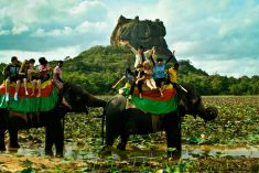 Sri Lanka: Paradise threatened; 11.1% GDP contribution by tourism