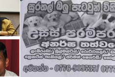 'Puppies for Sale' Poster campaign to intimidate Nimalka and Sunil