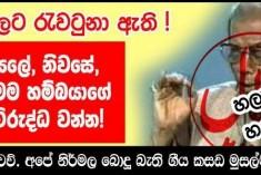 The Buddhist Crusade Driving Sri Lankan Muslims Into Radicalism
