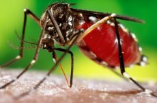 WHO Approves World's First-Ever Dengue Vaccine