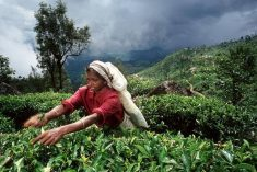 A bitter brew: For Sri Lanka's tea estate workers, fair wage is still elusive