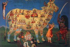 Jallikattu and the Bovine Underbelly of Indian Nationalism