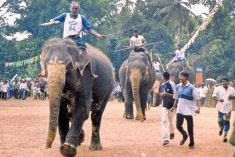 Sri Lanka: Baberic avurudu Elephant racing under fire